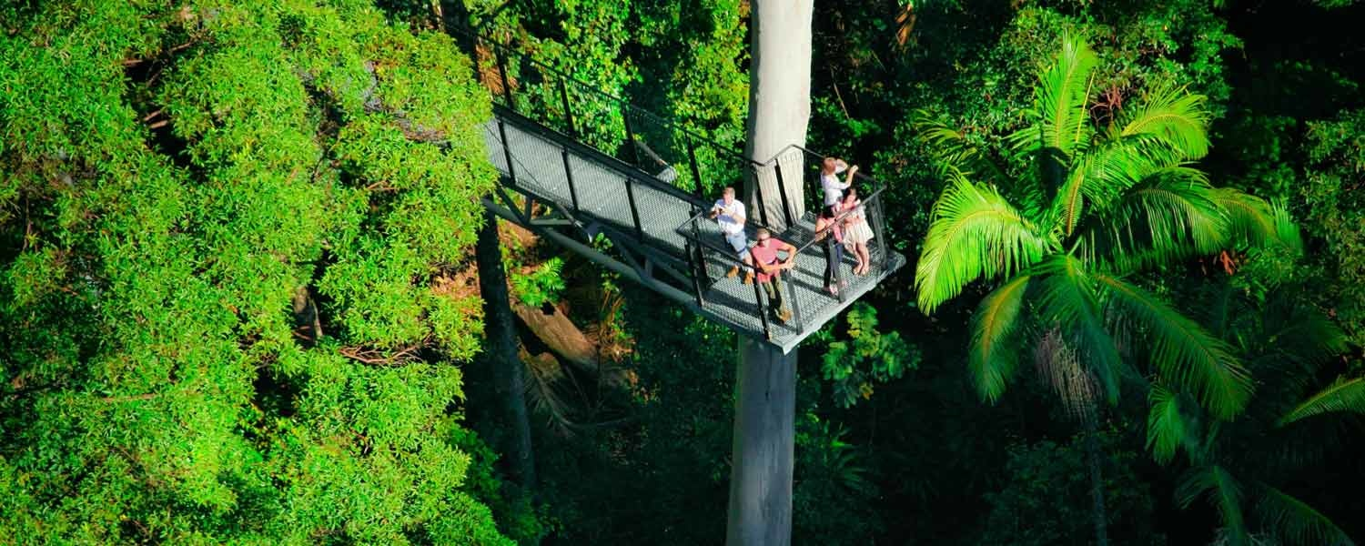Tamborine Rainforest Skywalk - Cantilever from Heli