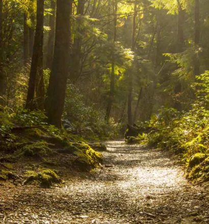 A Walk In The Park - Tamborine Mountain