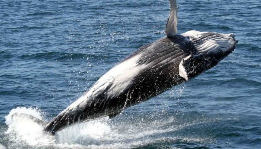 Whale Watching Experience Of A Lifetime