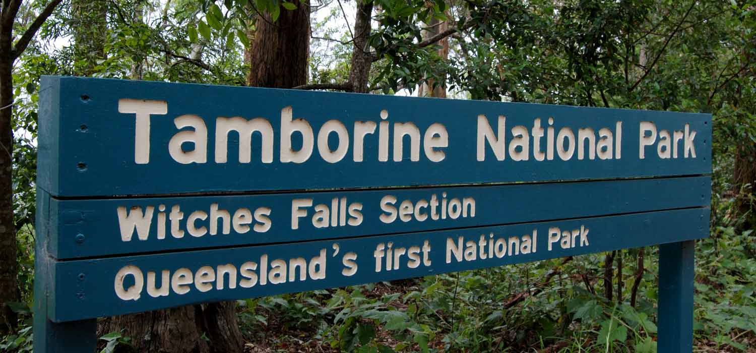 Witches Falls Section - Tamborine National Park