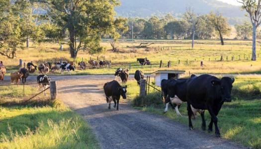 Tommerups Dairy Farm – Farmstay