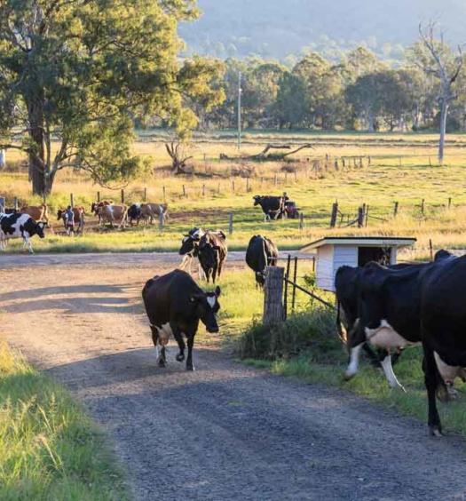 Tommerups Dairy Farm Farmstay