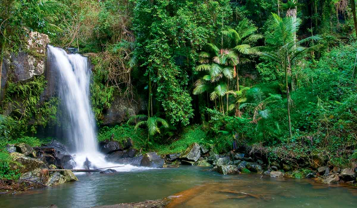 Waterfall - Curtis Falls on Tamborine Mountain