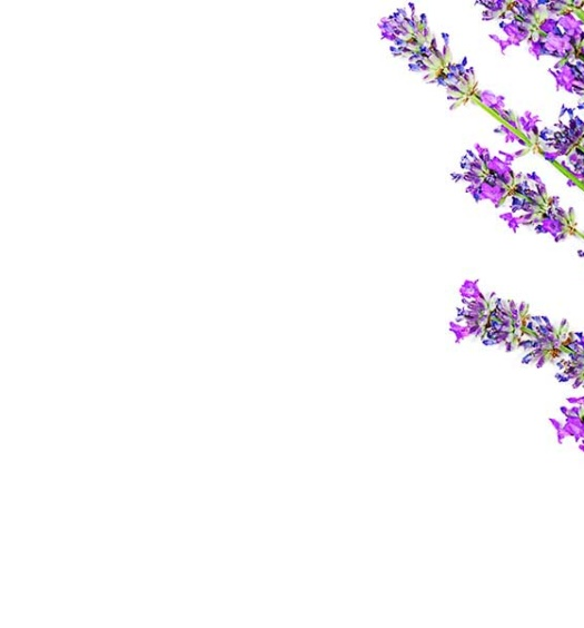 Banner for Nardoo Lavender Header