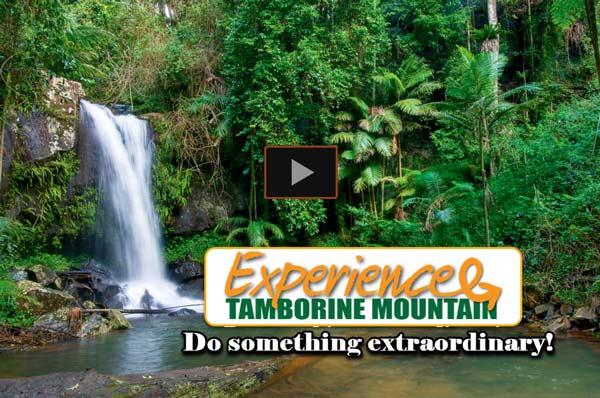 Curtis Falls Tamborine Mountain